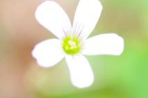 Fleur!